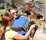 falconry.png