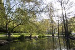 Botany Ponds 1
