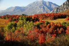 Uinta-Wasatch-Cache National Forest Campgrounds