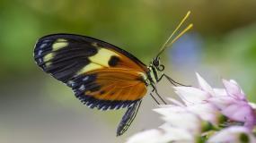 TN Aquarium_Longwing Butterfly