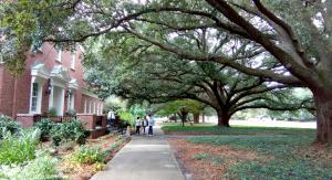 UNCW campus trees