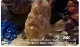 Ripley's Animal Spotlight: Frogfish