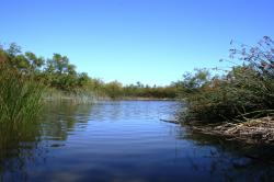 View of a river at San Joaquin Wildlife Sanctuary