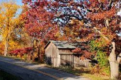 A barn sits within trees during the fall time