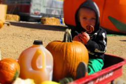 Pumpkins & Pilsners Estes Park