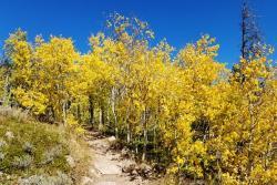 Fall Aspens in Cheyenne