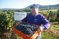 Jerome from Jerome's U Pick poses for a photo with a bin of grapes