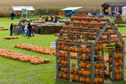 A house made out of pumpkins stands at the Pickn' patch