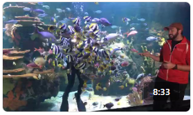 Ripley's Aquarium Rainbow Rock Dive Show