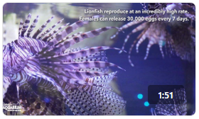 Ripley's Animal Spotlight: Lionfish