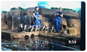 Ripley's Aquarium: Feed the Penguins