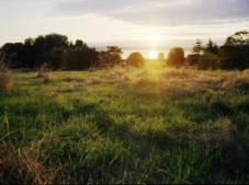 Discovery Park Blog Sunset