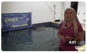 Ripley's Destination Education: Green Sea Turtle