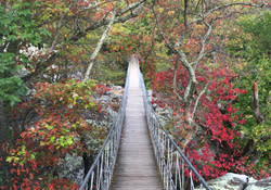 Rock City_Swing-A-Long Bridge