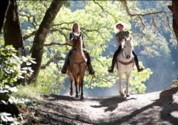 Two horseback riders on a wooded trail