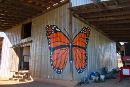 Vitamin O McAdams farm Butterfly