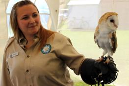 Luna the common barn owl is a wildlife educational ambassador for Wildlife Haven Rehabilitation Centre.