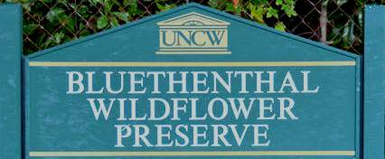 Bluethenthal Wildflower Preserve