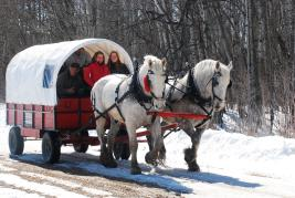Horse-drawn wagon rides at McCreary's Manitoba Maple Syrup Festival