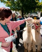 """Enjoy the """"bounty of the harvest"""" in Cooperstown at The Farmers' Museum's 33rd annual Harvest Festival, taking place Saturday and Sunday, September 17 and 18 from 10:00 a.m. to 5:00 p.m. with live music both days and new activities for children."""