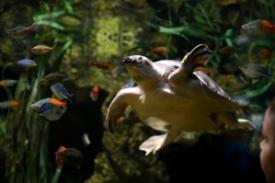 Encore Atlanta_TN Aquarium