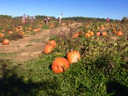 Paulus Orchards Pumpkin Patch