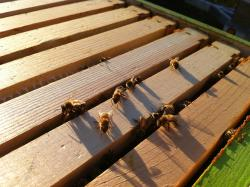 Light of Day Pollinators