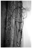 Jean-Jaques Maré, buried on Hart Island January 11, 2000. ©2011 Melinda Hunt/The Hart Island Project