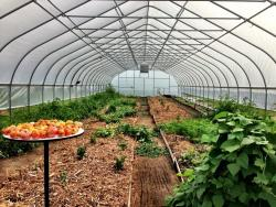 Light of Day Organics Hoop House