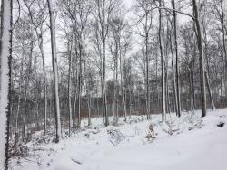 Palmer Woods Forest Preserve