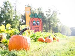 Huber's Orchard Pumpkins