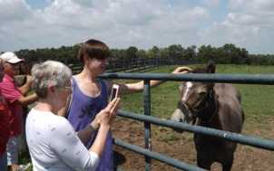 Horse Farm Tours, Inc.