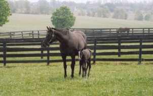 Kentucky Horse Tours