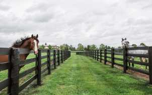 Horses of Kentucky Private Guide