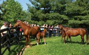 Horse Farm Tours; Lexington, KY
