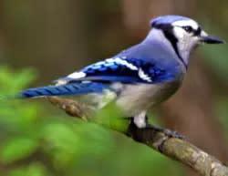 Bird Watching in Laurel Highlands, PA | Scenic Drive