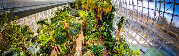 Interior of Crystal Bridge at Myriad Botanical Gardens