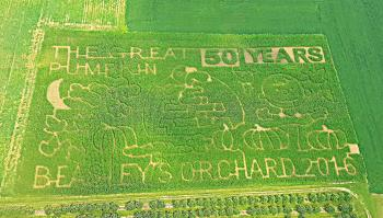 2016 Corn Maze at Beasley's Orchard