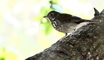 Birds and Botany Monthly Walk at SLO Botanical Garden