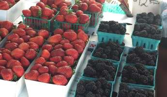 Atascadero Farmers Market- Daylight Savings Time Begins