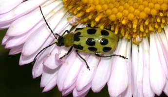 Garden Pests: The Good, the Bad, and the Bugly at SLO Botanical Garden