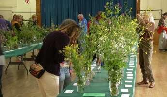 14th Annual Cambria Wildflower Show