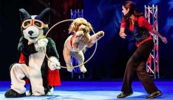 Perondi's Stunt Dog Experience