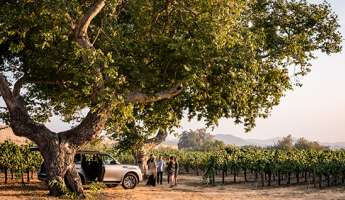 Vineyard Excursion