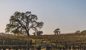 Earth Day Vineyard & Lunch Tour