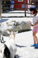 Chattanooga Zoo_Traveling Mom