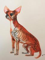 Danny Allain artwork, Fox