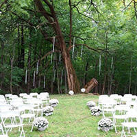 Willowfield Wedding Tree
