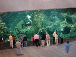 Seattle Aquarium Scuba Diver