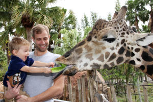 Giraffes at Tampa's Lowry Park Zoo